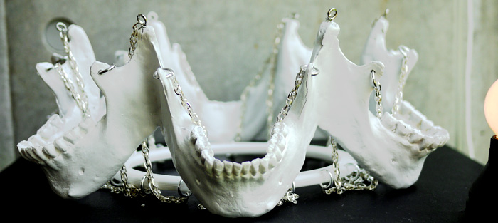 joji kojima crown of jaws
